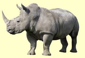caracteristicas rinoceronte