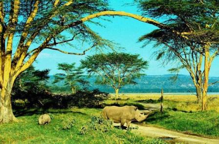 rinoceronte y cria