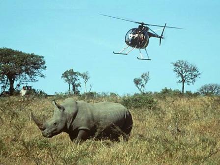 rinoceronte en peligro