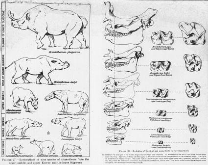 rinoceronte evolucion